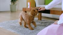愛犬を守ろう 小さくておいしいビーフフレーバー錠