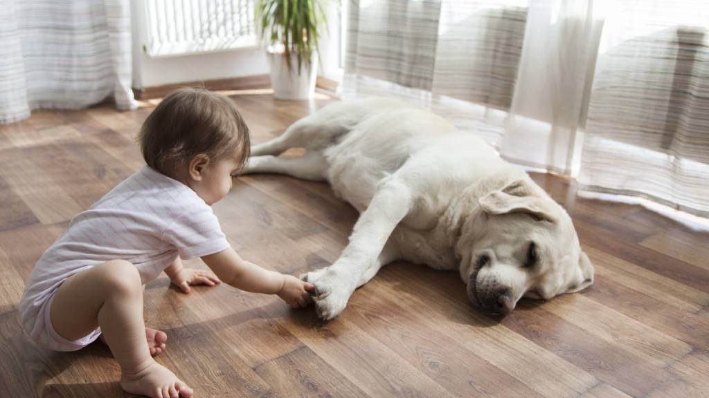 Young child indoors with mature pet dog