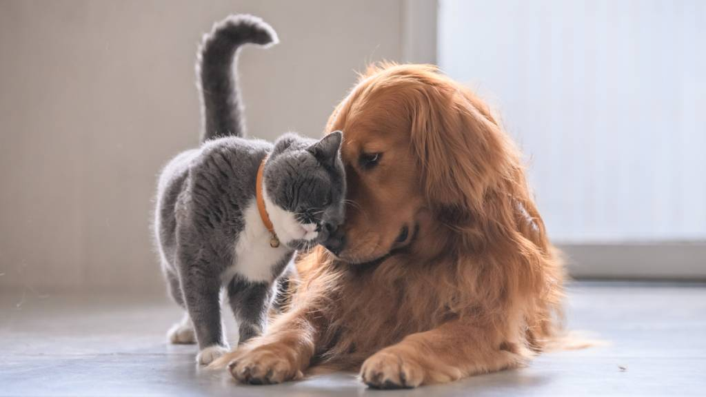 cat and dog socialising