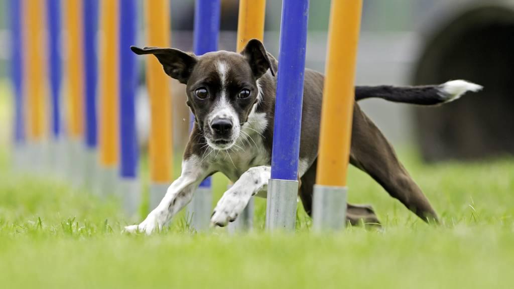 dog workout running