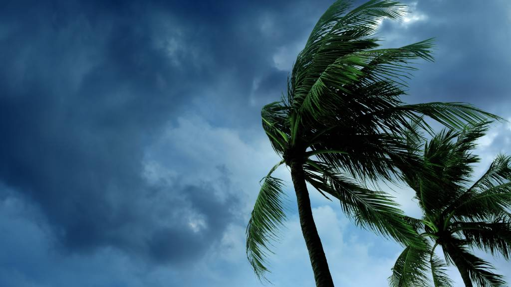 Palm trees and stormy sky before a cyclone