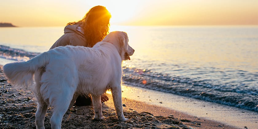 woman and dog on beach holiday