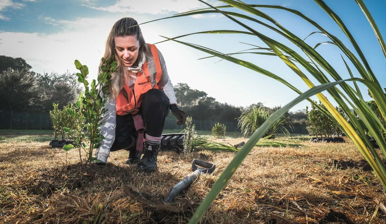 Stakeholder liaison advisor, Jennifer Charteris helps with regenerative planting events within the communities she liaises with on Watercare infrastructure projects.