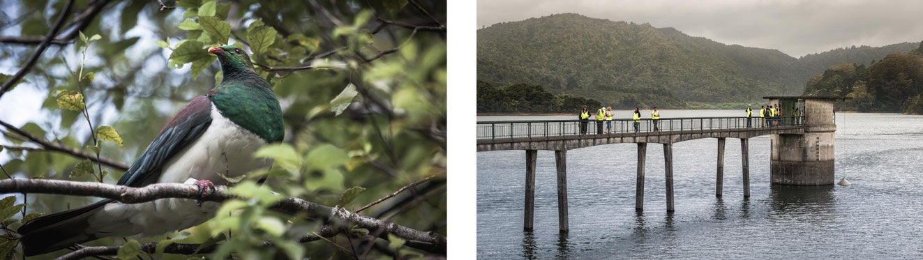 Kereru in a tree at the Upper Nihotapu Reservoir and a view of dam infrastructure at Upper Mangatawhiri Reservoir.