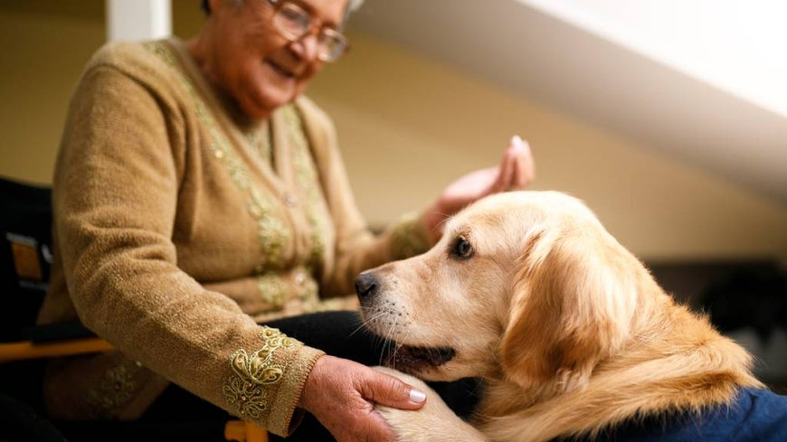 Senior woman at home with assistance dog.