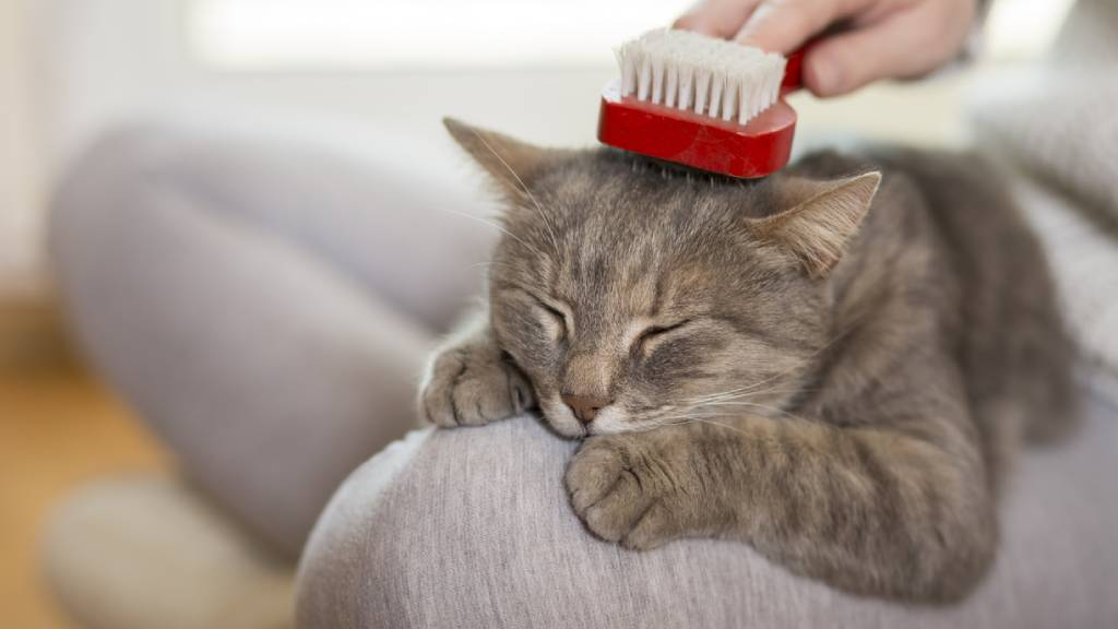 cat being groomed by senior
