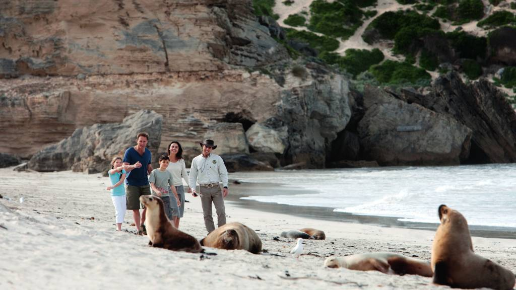 family on beach with seals
