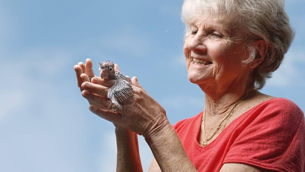 Volunteer Dianna hold a baby bird in her hands