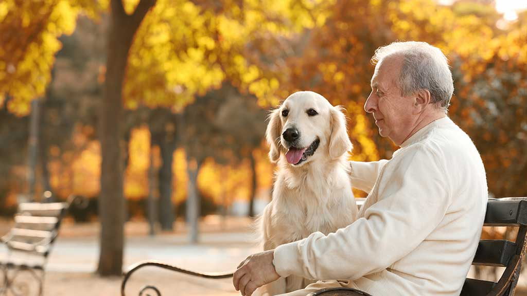 7 reasons why adopting an older dog is best for Baby Boomers