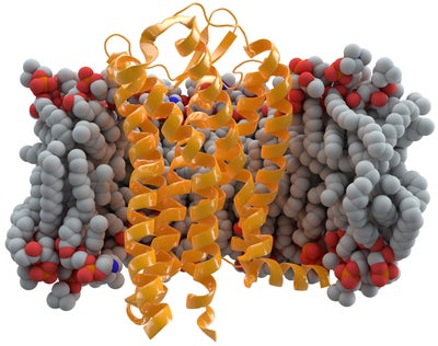 CCR5 Receptor