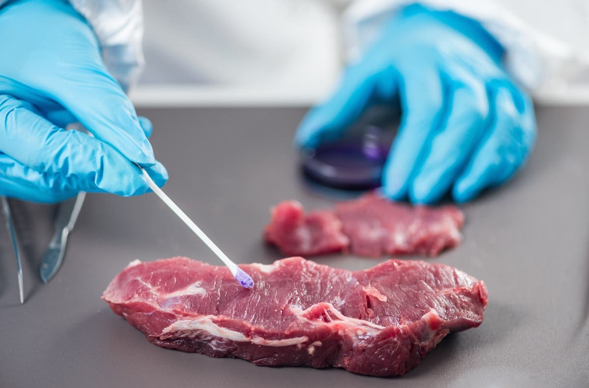 Scientist swabbing red meat for testing purposes
