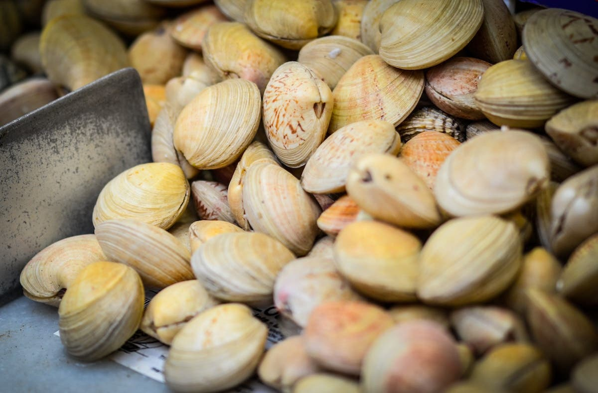 Fresh clams for sale at the market