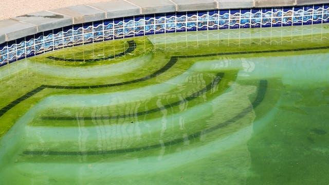 Slimey green pool water