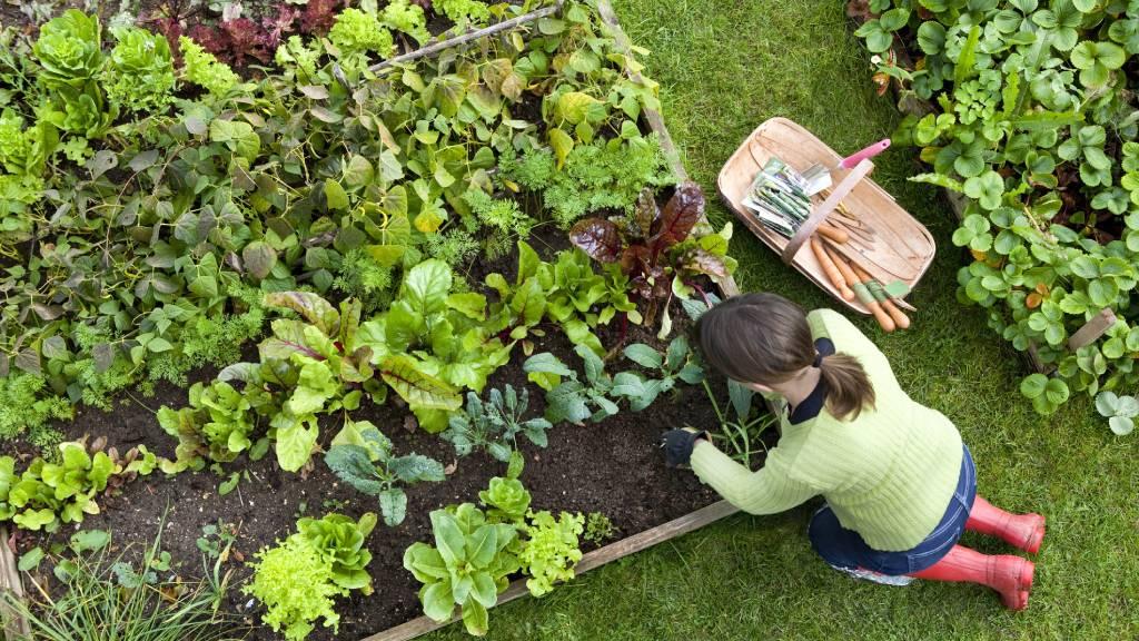 woman planting crops in backyard