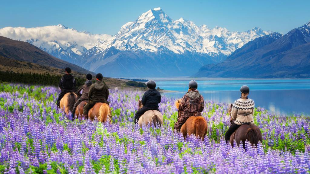 travelers ride horses in lupine flower field overlooking the beautiful landscape with snowy mountains and water