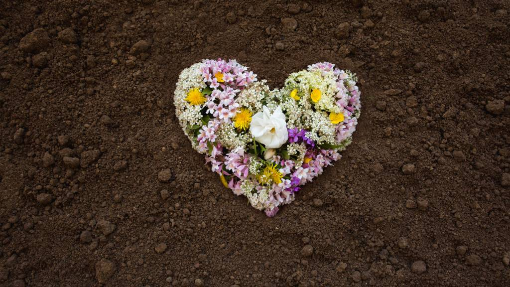 assorted pastel flowers in hard shape placed on soil