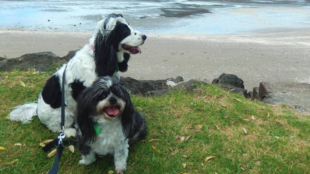 dogs on the beachside