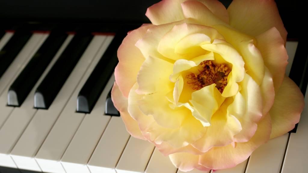 Rose on a keyboard