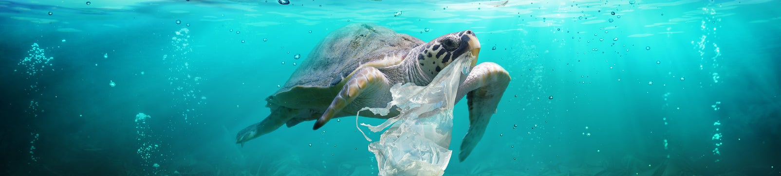 Turtle underwater with a plastic bag