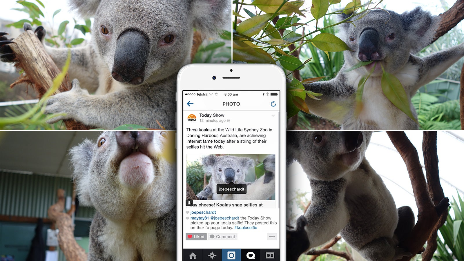 Sony   The US Today Show instagram post about the Koala Selfie campaign   Devotion