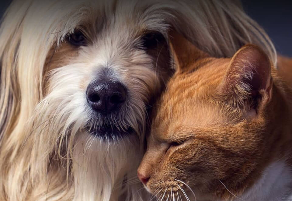 Real Pet Food Company | dog and cat resting on each other | Devotion